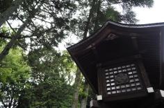 岡崎神社 trees